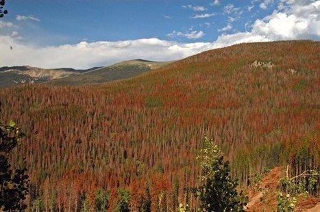 Climate Change Could Change Southwestern Landscape | Climate change challenges | Scoop.it
