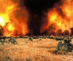 Tracking invasive cheatgrass role in larger, more frequent Western fires | Sustain Our Earth | Scoop.it