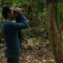 La forêt des sons | DESARTSONNANTS - CRÉATION SONORE ET ENVIRONNEMENT - ENVIRONMENTAL SOUND ART - PAYSAGES ET ECOLOGIE SONORE | Scoop.it
