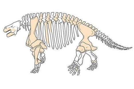 Ugly herbivores covered with bony knobs roamed the earth before dinosaurs | No Such Thing As The News | Scoop.it