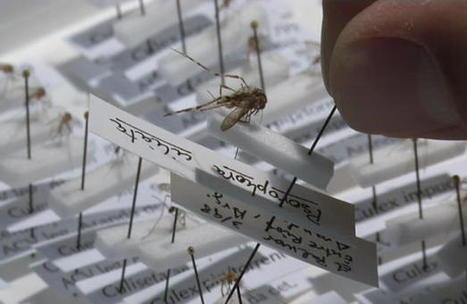 Els mosquits, a la baixa-BTVNOTÍCIES.cat | Recull de premsa del Servei de Control de Mosquits | Scoop.it
