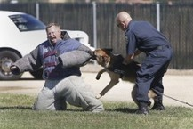 POLICE DOGS EXHIBITING RACISM? | Breaking Stereotypes | Scoop.it