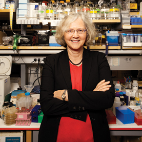 Telomeres: Anecdotes from a Nobel Prize Winner | Age-reversal | Scoop.it