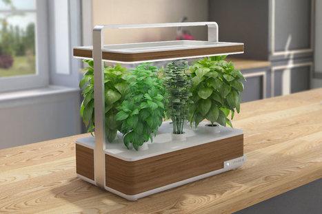 UP Magazine - Des plantes en capsules pour votre jardin connecté | Pêle-même de bonnes nouvelles !  recherche, innovation, politique, société, planète, bref... #changerlemonde | Scoop.it