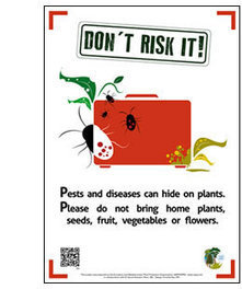 Don't bring home exotic plants in your luggage | Plant Pests - Global Travellers | Scoop.it