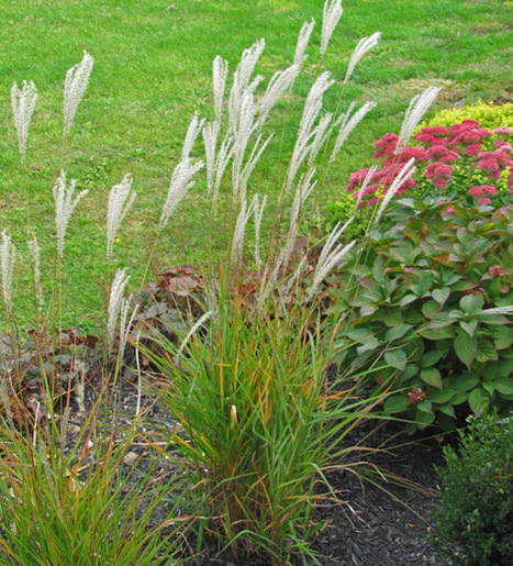 See ya ornamental grasses : An Obsessive Neurotic Gardener   Annie Haven   Haven Brand   Scoop.it