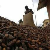 Africa needs to make agriculture create wealth not just food | NGOs in Human Rights, Peace and Development | Scoop.it
