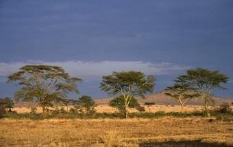 "Africa-wide ""Great Green Wall"" to Halt Sahara's Spread?   Unit 4 geog desertification   Scoop.it"