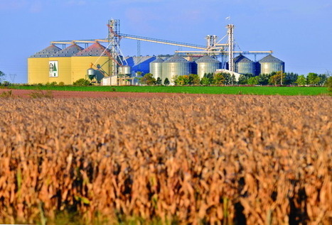 China may begin importing Argentina corn | MAIZE | Scoop.it