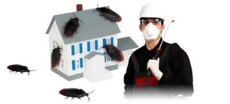 شركة مكافحة حشرات بحائل بريده القصيم | شركة تنظيف خزانات بالرياض | Scoop.it