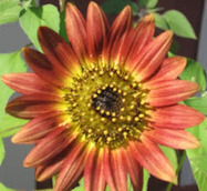 Modern Mia Gardening: Check Twitter for Gardening Knowledge | Annie Haven | Haven Brand | Scoop.it