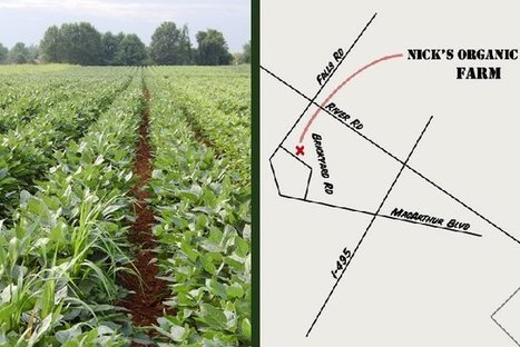 Nick's Organic Farm gets 6 month extension - Washington Times | Wholesome Food Association | Scoop.it