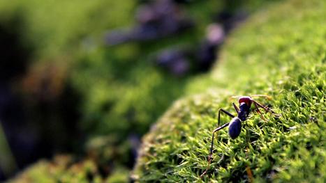 Le Jardin des Plantes : Quand les fourmis jardinent   pour mon jardin   Scoop.it