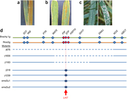 A recently evolved hexose transporter variant confers resistance to multiple pathogens in wheat : Nature Genetics : Nature Publishing Group | Plant-Microbe Interaction | Scoop.it