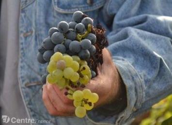 Les négociants et les viticulteurs travaillent ensemble dans le respect de l'appellation   Le meilleur des blogs sur le vin - Un community manager visite le monde du vin. www.jacques-tang.fr   Scoop.it