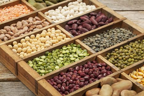 The power of plant-based protein: A longer life? | CIHEAM Press Review | Scoop.it