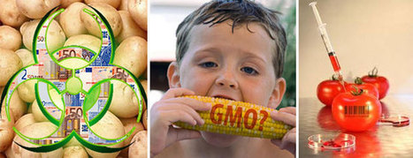 Top 20 Foods and Products that have been Genetically Modified | Holistically Fit | Scoop.it
