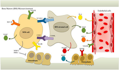 Development of Novel Immunotherapies for Multiple Myeloma | Immunology and Biotherapies | Scoop.it