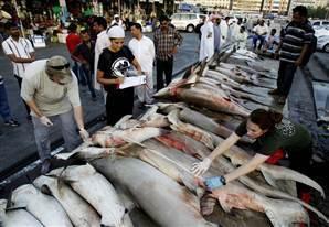 Sharks killed for fins: Again and again! | #sharks #oceans #scuba #ocean #scubadiving | ediving | Scoop.it