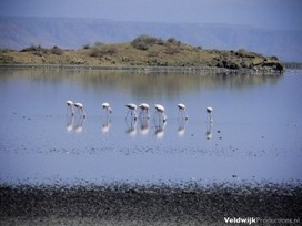 Contrary to Popular Belief, Lake Natron Does Not Instantly Turn Birds To Stone | Stranger Than Fiction | Scoop.it