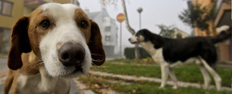 Montreal bylaw requires dogs to be biligual | No Such Thing As The News | Scoop.it