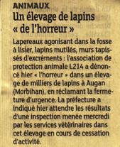 Un élevage de lapins de l'horreur / Dernières Nouvelles d'Alsace   Lapins - Revue de presse L214   Scoop.it