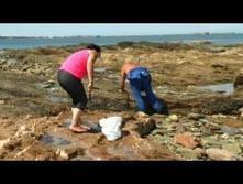 Grandes marées, algue toxique et coquillages : pourquoi il ne faut pas manger votre pêche | Toxique, soyons vigilant ! | Scoop.it