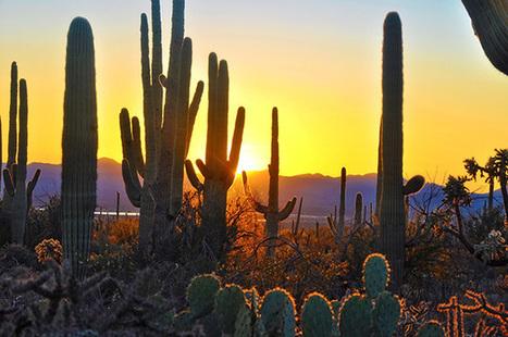 12 parcs nationaux des USA touchés par la pollution | Biodiversité | Scoop.it