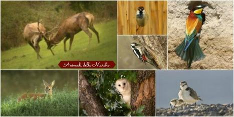 E' Primavera, tempo di scoprire gli animali delle Marche | Le Marche un'altra Italia | Scoop.it