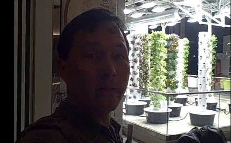 A Vertical Garden Feeds 10,000+ Visitors to Chicago O'Hare Airport   Vertical Urban Agriculture   Scoop.it