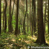 Forest management for a changing world   Timberland Investment   Scoop.it