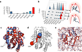 Dynamics and hydration explain failed functional transformation in dehalogenase design | Computational approaches for protein engineering and design | Scoop.it