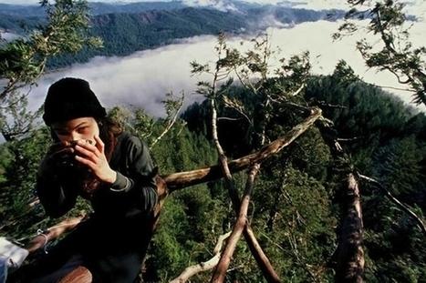 738 jours dans un séquoia millénaire pour le sauver de l'abattage | Leadership au Féminin à développer et soutenir! | Scoop.it