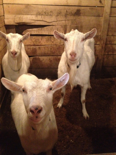Barnyard Friends | Social Media and Animal Shelters | Scoop.it