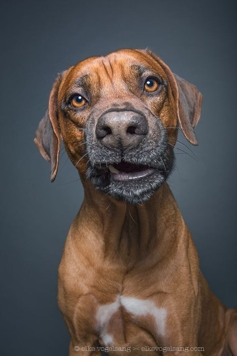 Photographer captures dogs looking very skeptical of the camera | Food for Pets | Scoop.it