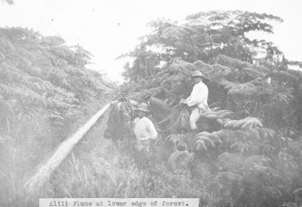 The Ka`u Calendar News Briefs, Hawai`i Island: Ka`u News Briefs June 28, 2012 | Land Surveyors | Scoop.it
