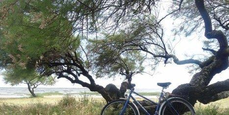 Les Bicyclettes Bleues sur le Bassin d'Arcachon, un programme riche d'activités! | Actu Réseau MOPA | Scoop.it