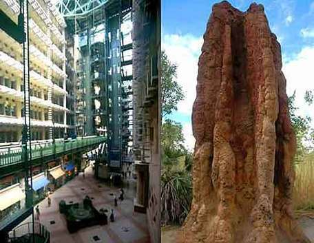 BIOMIMETIC ARCHITECTURE: Green Building in Zimbabwe Modeled After Termite Mounds | Grade 5 Energy Unit | Scoop.it
