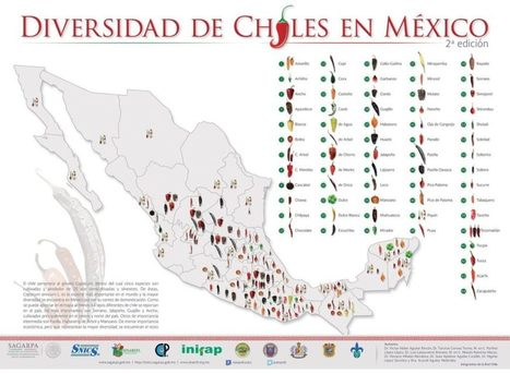 Estos son los 64 tipos de chiles que crecen en México (Infográfico) - Más de Mx | Educacion, ecologia y TIC | Scoop.it