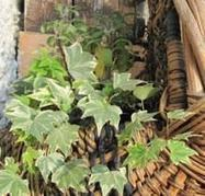 Diary of a window box garden: the permaculture prescription | MSuttonPermaculture | Scoop.it