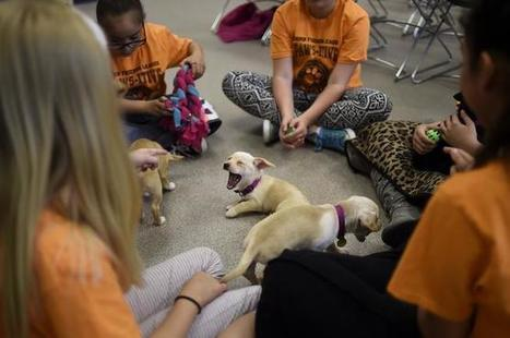 Training kids to avoid dog attacks can help them have safer summer   Whole Earth Pets   Scoop.it