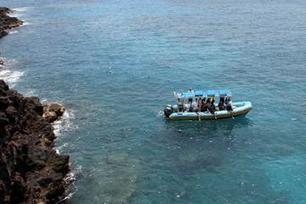 Hawaii Combo: Wild Dolphin Swim and Kealakekua Bay Snorkeling   Hawaii's News @ Twitter Speed!   Scoop.it