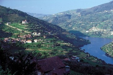 Symington acquires Douro vineyard after 100-year wait | Vitabella Wine Daily Gossip | Scoop.it