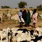 SENEGAL: Drought response slowed by election fever   Risques et Catastrophes naturelles dans le monde   Scoop.it
