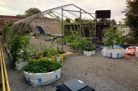 Vegetable Roof Garden | Garden Design | Wellington Aquaponics | Scoop.it