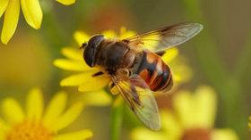 Dalle api una possibile cura per l'AIDS - La Stampa | Cure Naturali | Scoop.it