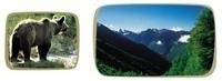 Cap21 - Corinne Lepage soutient la restauration de la population d'Ours dans les Pyrénées | CAP21 Le Mouvement | Scoop.it