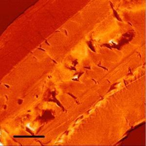 Unexpected exoskeleton remnants found in Paleozoic fossils | History | Scoop.it