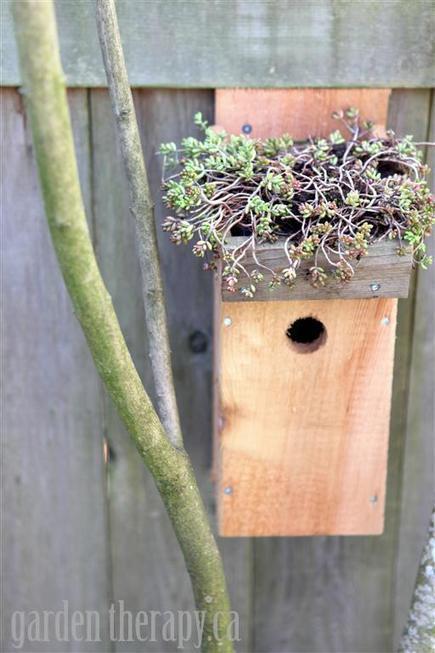 Green Roof Birdhouse Tutorial | Annie Haven | Haven Brand | Scoop.it