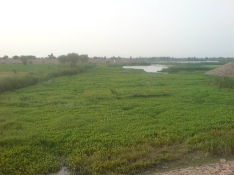 [photos] Village,Canals, Land and Life.   Pakistan   Scoop.it